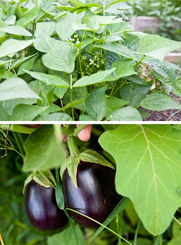Eggplant and Green Beans
