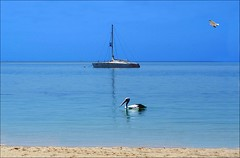 It's Summer Time, And The Living Is Easy.............. (a777thunder (Thanks for your support)) Tags: reflection yacht australia pelican westernaustralia monkeymia sharkbay worldheritagearea