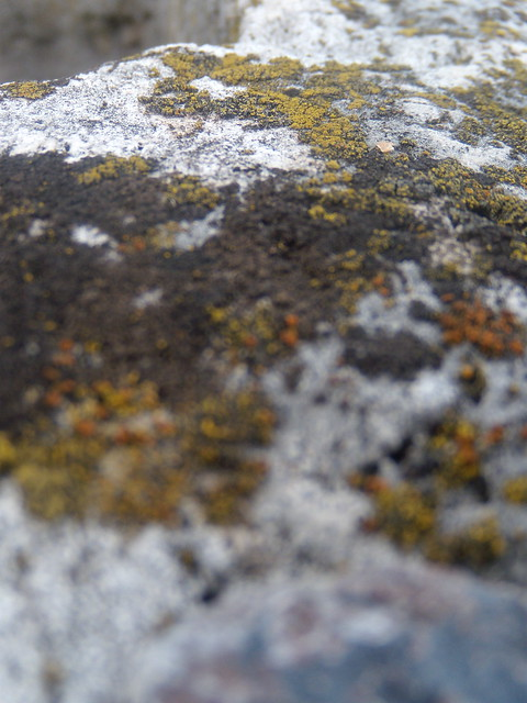 lichens of the well