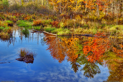 Autumn Landscape in Maine (Greg from Maine) Tags: autumn autumnfoliage fallleaves leaves reflections landscape maine newengland penobscot fallseason autumnlandscape penobscotcounty garlandmaine