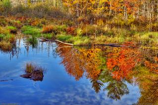Autumn Landscape in Maine