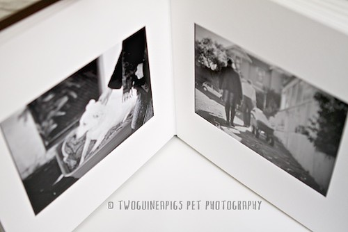 4.twoguineapigs pet photography new product offering, custom pet portraiture