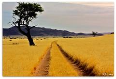 SESRIEM (RLuna) Tags: africa trip travel viaje sunset naturaleza nature fauna canon landscape photography flickr paisaje spotlight arena zimbabwe desierto duna sesriem namibia vacaciones cultura zambia reserva movistar sossusvlei medioambiente ecologia parquenacional sudafrica deadvlei southafricanairways bostwana comair airlink abigfave civair transkalahari rluna1982 rluna oltusfotos allegianceair instagram naufkluft cemair