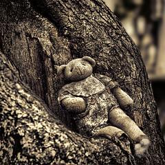 Forgotten (Light Echoes) Tags: tree abandoned toy nikon pennsylvania teddybear fleamarket abandonment hdr d90 dmk adamstown shuppsgrove