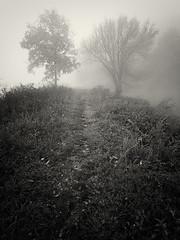 The Tao (Jeff Damron) Tags: trees blackandwhite bw fog path toned lr3 olympuse620 niksilverefexpro2 zuiko918mmlens