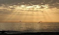 Free flight (marta) Tags: seagulls sunsets rays tramonti gabbiani raggi freeflight vololibero