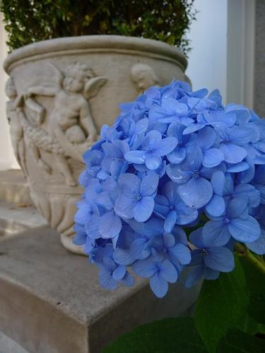 Hydrangea & Urn