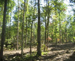 Hardwood stand immediately after the harvest was completed.