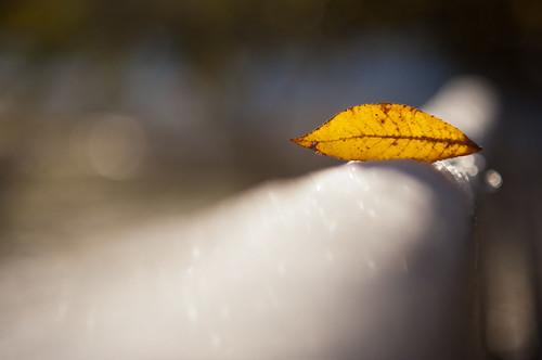 snowbird by nardell