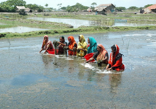 Women in aquaculture, Bangladesh. Photo by WorldFish, 2008
