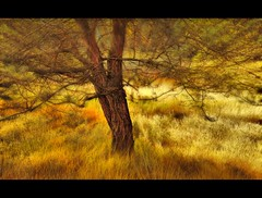 Autumn oktober 2011 (cees van gastel) Tags: autumn tree nature grass landscape woods herfst natuur boom gras bos limburg landschap beegderhei canonef100400mmf4556lisusm ceesvangastel canon40d