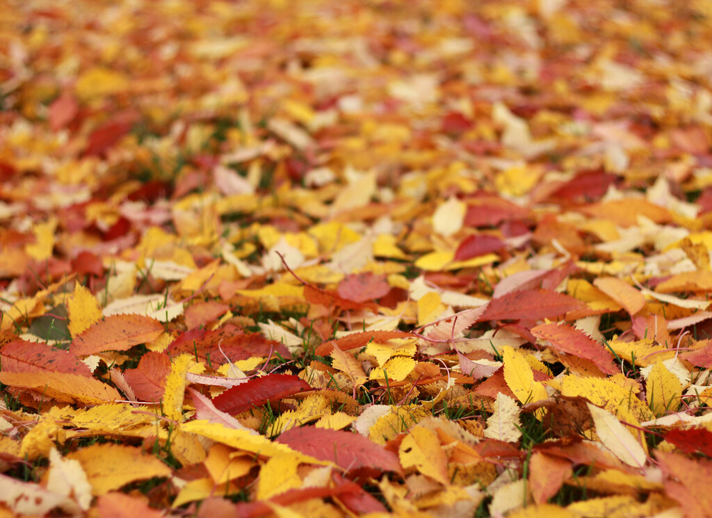 Don't Rake Those Leaves