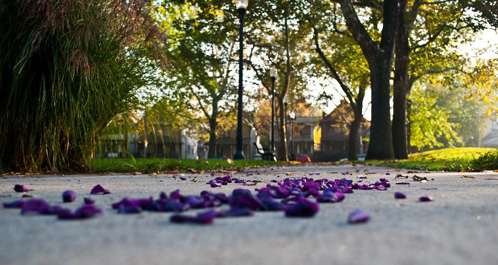 365-149 Purple Rain