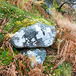 Rocks-&-Trees
