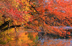 Wellesley College Foliage (mjmalone54) Tags: morning blue autumn trees sky reflection colors leaves canon photo pond october massachusetts foliage wellesleycollege impressedbeauty wabanpond doubleniceshot mygearandme mygearandmepremium mygearandmebronze mygearandmesilver dblringexcellence tplringexcellence artistoftheyearlevel2 aboveandbeyondlevel1 eltringexcellence aboveandbeyondlevel2 aboveandbeyondlevel3