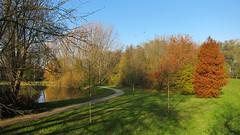 Our lake (Dimormar!) Tags: autumn sunshine herfst zon herfstkleuren wandeling hoogvliet kraaien sooc zalmplaat