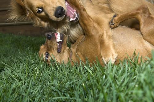 mendoza_dogs_06_14_11_4