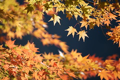 Autumn Color (peaceful-jp-scenery) Tags: autumn lake maple   syoji   dslra900 sal70300g sony70300g blinkagain
