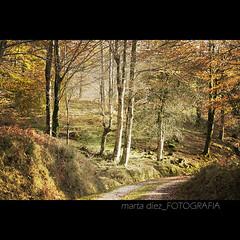 _otoño de cobre y oro_ ([marta díez . fotografía]) Tags: forest canon arboles camino bosque otoño montaña sendero cantabria saja ucieda 400d minerva77 martadiez