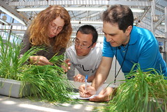 Wheat trainees study seedling rust symptoms (CIMMYT) Tags: people test mxico training mexico student mujer rust gente wheat headquarters course staff greenhouse breeding resistencia teaching prueba agriculture seleccin screening sede improvement seedling curso resistance scoring scientist roya pathology participant trigo researcher researchcenter trainee empleado agricultura explaining enseando invernadero discussing discutiendo becario researchstation pathologist cientfico capacitacin takingnotes cientfica plntula capacitybuilding explicando elbatn enseanaza experimentstation participante cimmyt tomandoapuntes patologa investigador mejoramiento calificando patlogo diseaseresistance centrodeinvestigaciones resistenciaaenfermedades estacinexperimental estacindeinvestigacin wheatimprovementcourse formacinenmejoramientodetrigo desarrollodecapacidades sybilherrerafoessel wheatimprovementandpathologytrainingprogram wheatimprovementandpathologycourse