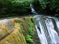 i think i also almost fell off a cliff taking this one (WiffleHat) Tags: cliff green water leaves river waterfall washington moss bellingham ferns
