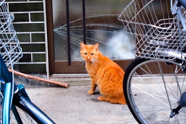 Today's Cat@2011-11-17