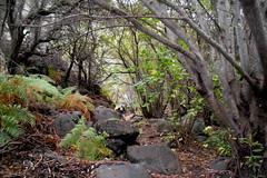 Barranco de los Cernicalos isla de Gran Canaria senderismo 13 (Rafael Gomez - http://micamara.es) Tags: barranco de los cernícalos senderos gran canaria islas canarias isla españa spain senderismo rutas excursiones senderistas cernicalos