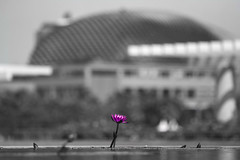 Marina Bay Sands, Singapore (TomLiaPhotography) Tags: sun flower water reflections singapore lilly 70200l marinabaysands
