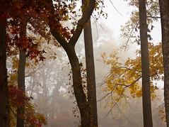 PB100069 (MizGingerSnaps) Tags: morning autumn fall beach fog virginia riverside williamsburg jamestown jamesriver 2011 jamestownbeach jamestownferry jamestownbeachpark