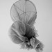jellyfish or mosquito net ... Berbera, Somaliland