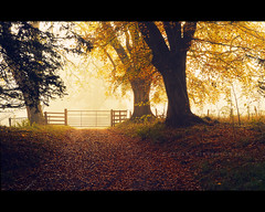 Gateway to enlightenment (Stuart Stevenson) Tags: uk autumn trees light mist leaves fog fence woodland landscape photography golden scotland three gate path wideangle treetrunk enchantedforest lanark diffusedlight clydevalley lateautumn southlanarkshire thanksforviewing canon5dmkii stuartstevenson fallsofclydenaturereserve stuartstevenson
