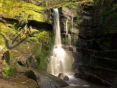 Fairy Glen Parbold. (Mr Grimesdale) Tags: waterfall lancashire parbold fairyglen stevewallace mrgrimesdale