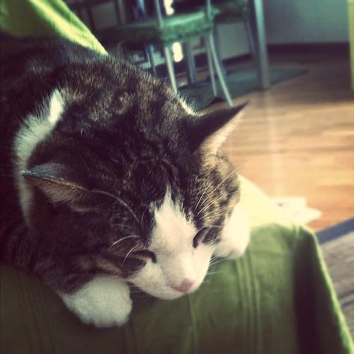 Kitty Cat cute #kitty #cat #cute