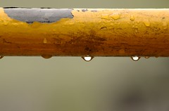 Despues de la lluvia (carlos_ar2000) Tags: color colour argentina rain lluvia buenosaires dof pipe drop gota santelmo cao