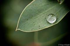 Una gota, un mundo / A drop, a world (hunter of moments) Tags: world barcelona naturaleza color macro verde green art hoja luz hojas nikon branches jardin natura drop botanico condensation gota simple tamron mundo belleza rocio ramas d5000
