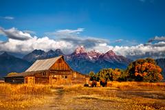 _MG_2666-Edit-Edit.jpg (betty wiley) Tags: autumn trees mountains buffalo roman sunday wyoming tetons day4 jacksonhole mormonrow mormonbarn