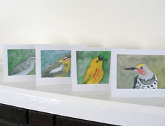 Assorted bird cards (mbrichmond) Tags: bluejay chickadee kingfisher owl flicker vireo yellowbirds birdprints assortedbirds maryrichmonddesign birdcards naturecards songbirdcards frommywatercolors