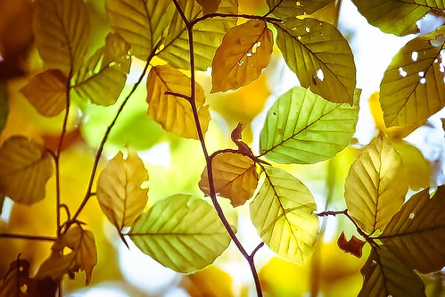 Autumn Light... by fionajonesphotography