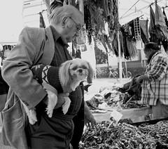 Dog's life (ruggeroranzani) Tags: cane uomo mercato marghera dp1s