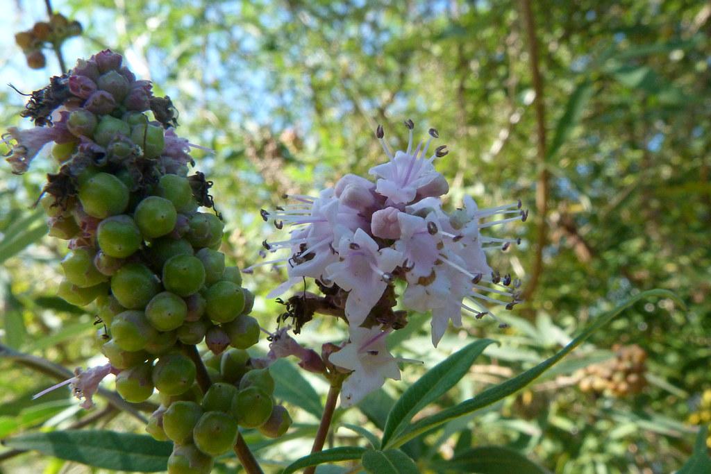14-10-2011-tynee-flower2