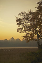 Yellow Sunrise (D & E Grey Wolf Photography) Tags: light sky mist ontario canada field yellow fog rural sunrise landscape farm soybean wyevale