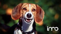 Ensaio | Pet (studioimo) Tags: brazil dog pets animal brasil canon photography essays imagens images production fotografia felipe goinia imo facebook lightroom ensaios goiania produo maikon