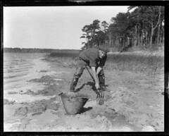 Will can certainly dig clams, Cotuit (Boston Public Library) Tags: people capecod lesliejones