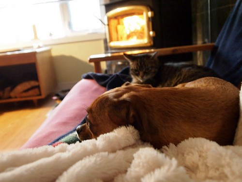 the dog & cat loved the fire.