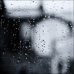 25/31 - Wet wet wet (julian fraser photography) Tags: blackandwhite bw water rain mono droplets bokeh depthoffield f28 raindrop 2470mm wetwetwet d700 octoberchallenge photoadayforamonth