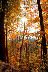 the end is here... (^ Missi ^) Tags: ontario fall yellow canon landscapes sunnyday riverwood canon24105mmf4l canonautumn canon5dmkii missi1005 TGAM:photodesk=largedepth
