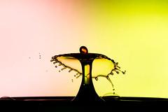 Bubbly Stuff (Franois Doroth) Tags: color colour water colors droplets drops waterdrop eau couleurs flash drop drip droplet drips splash dye waterdrops couleur colouring goutte collision foodcolouring fooddye foodcolor gouttes flashes highspeedphotography colorant gouttelettes strobist gouttelette cameraaxe franoisdoroth francoisdorothe