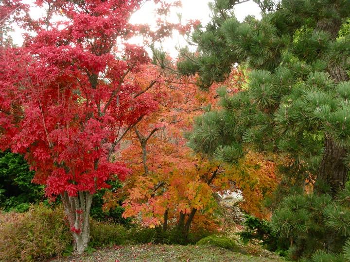 ubc botanical garden 008