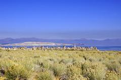 2011-10-15 10-23 Sierra Nevada 364 Mono Lake