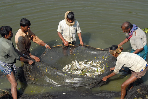Fishing, Bangladesh. Photo by WorldFish, 2007